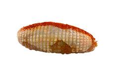 Kiprollade 1500-1600 gram